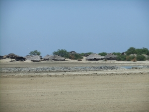 Dry rice padi fields of Timor Leste