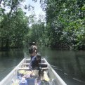 Cruising into the mangroves