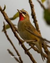 Oriental Bird Club Image Database